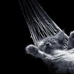lazy-cat-oh-duit-2.jpg